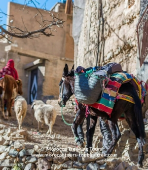 Berber villages trip in Morocco